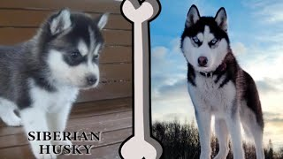 A selection of the most popular dogs. puppy dog - dog song: Ahxello...