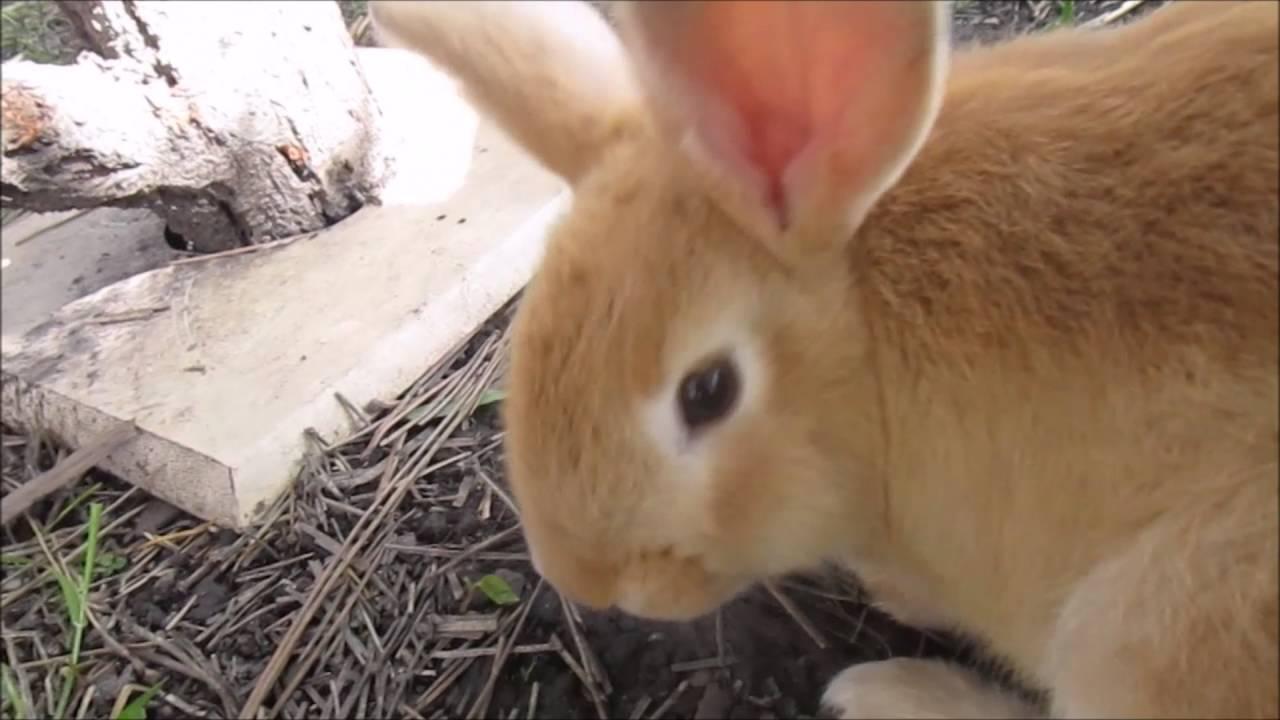 kaninchen im au engehege youtube