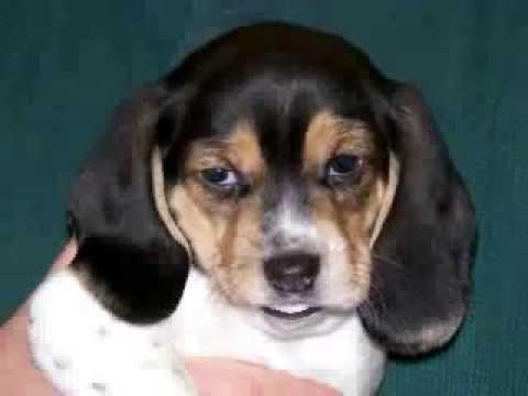 Second Chance Animal Rescue of Vandalia Illinois