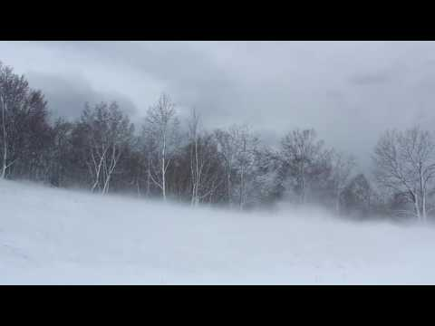 Winter Wind 1 Hour   Relaxing Snowstorm Sound, Winds Blowing Snow Across Forest Meadow