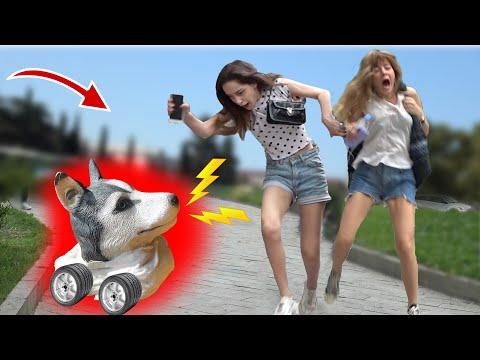 FAKE HUSKY SCARE PRANK #2| FAKE DOG  PRANK