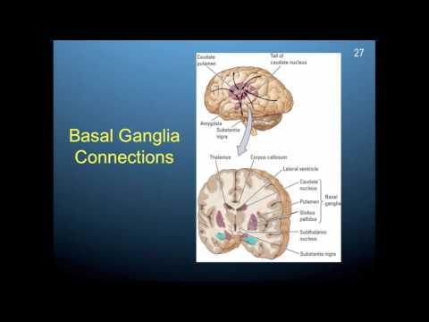 Chapter 11 part 4: Basal ganglia and cerebellum