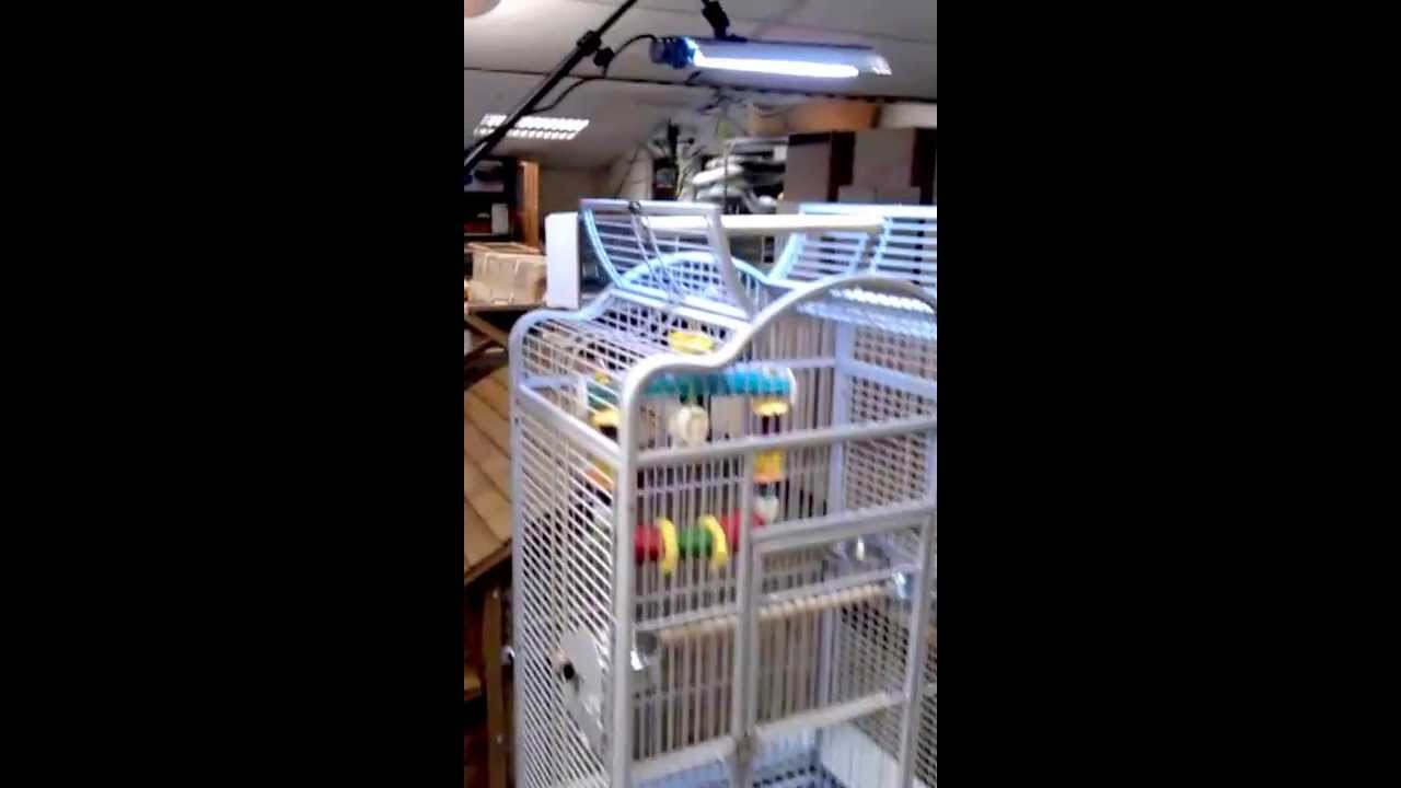 High Power Lamp Arcadia Parrot Pro Uv Flood And Adjustable Stand - Youtube