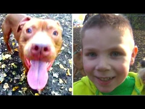 Pitbull Saves Toddler's Life