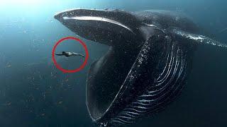 Cosa Si Nasconde Negli Abissi Degli Oceani?