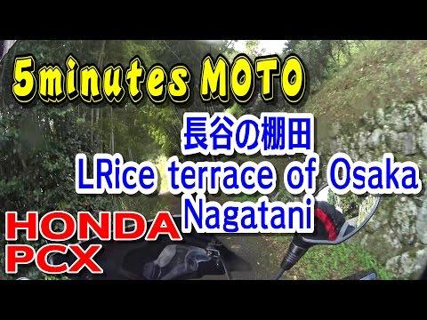 5 minutes MOTO バイクツーリング 長谷の棚田 HONDA PCX Rice terrace of Osaka Nagatani