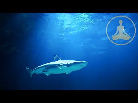 Shark Meditation - HDTV - FULL HD 1080p