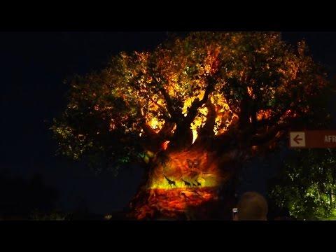 Tree of Life Projection Show, Disney's Animal Kingdom, Walt Disney World Resort