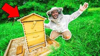 I Bought 100,000 HONEY BEES for My BACKYARD FARM!!!