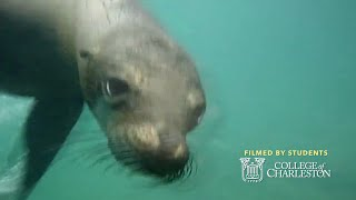 Swimming With Sea Lions -- Study Abroad In The Galapagos And Ecuador