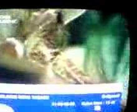 Billur Kalkavan: Porno izlemeyi seviyorum, bu bir özgürlüktür! from YouTube · Duration:  1 minutes 1 seconds