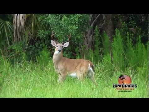 Everglades Adventures guided Deer hunt