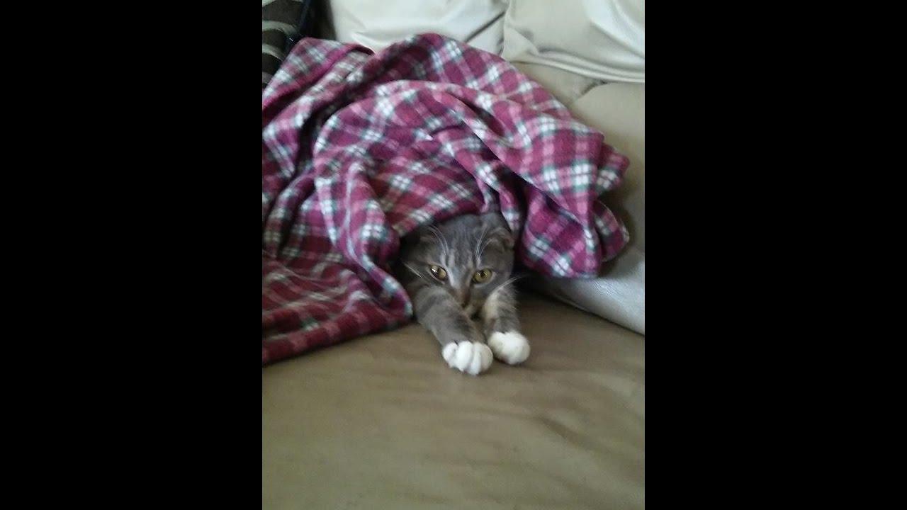 Lucy Cat Film