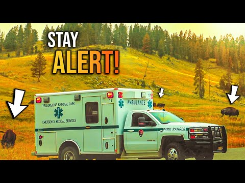 STAY ALERT in Yellowstone National Park 2020 - WATCH THIS!