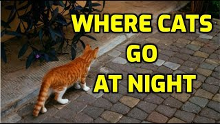 What Do Cats Do At Night When They Go Outside?