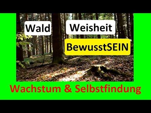 Wald, Weisheit, BewusstSEIN #2: Wachstum und Selbstfindung