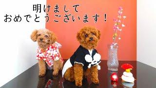 明けましておめでとうございます(*˘︶˘*).。.:*♡ 2019年もTaruちゃんファ...