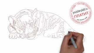 Как нарисовать полосатого тигра карандашом(Как нарисовать тигра поэтапно карандашом за короткий промежуток времени. Видео рассказывает о том, как..., 2014-07-10T14:01:53.000Z)