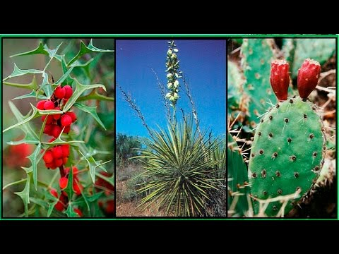 WILD PLANTS TO LIVE OFF THE LAND