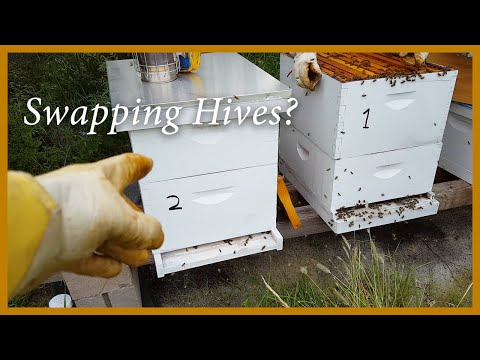 Honey Bees - Swapping Positions to Balance the Hives (using hive drift) - GSB S2 E4