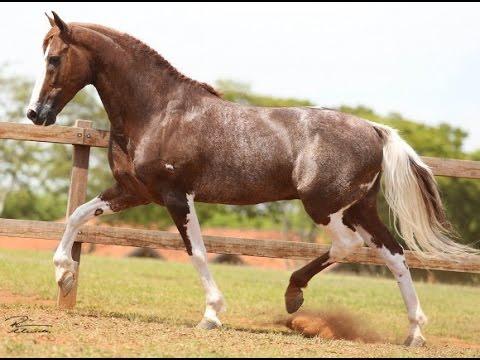 """Resultado de imagem para """"RADAR DO HARAS JL"""" cavalo"""