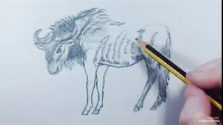 How to draw a Gnu - Como dibujar un Ñu