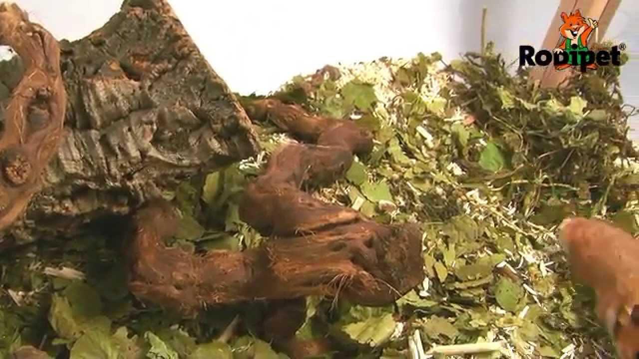 Nagarium Hamsterkäfig Einrichten Mit Rodipet® Enterrado