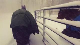 こんなの聞いてないよ、冷たいし寒いしもう帰る!雪の中、思わず回れ右してしまうウマたち