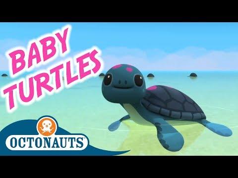Octonauts - The Baby Sea Turtles   Full Episode   Cartoons For Kids