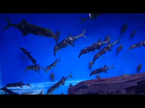 Is This The Best Aquarium Store In The UK?
