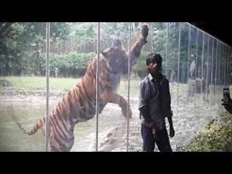 Zoo Animals Attacks Most Funny - Whatsapp Funny Video Compilations 2017