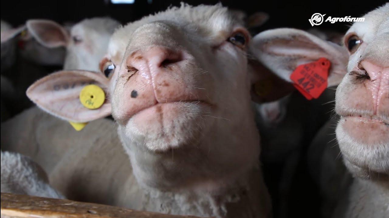 Kenőcs juh-ízületekhez. Az acromioclavicularis ízületi kezelés artrózisa