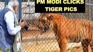 PM Modi clicks Tiger pictures | Narendra Modi plays with tigers