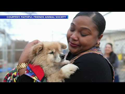 Lost dog saved from shelter, reunited with owner