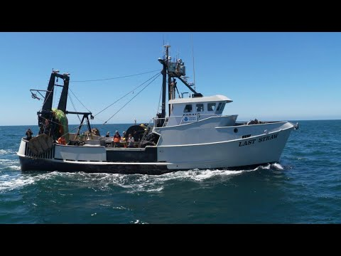 Reeling To Rebuilding: Success For West Coast Groundfish Fisheries