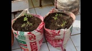 Simple Urban Farming : घर पर खेती
