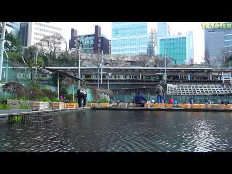 Tokyo Chill Session - Tokyo Fishing