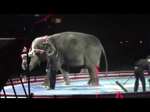 elephant vs girl porn