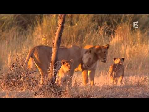 Lions vs Hommes Documentary