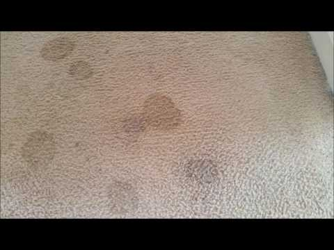 Cleaning Carpet Stains Carpet Wicking Spots Doovi