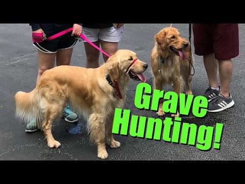 FAMOUS GRAVES For DOG LOVERS & Dog-Friendly Cemeteries!