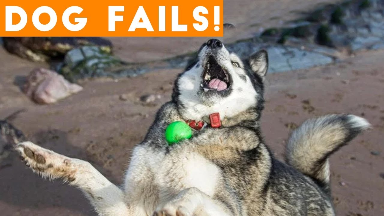 Dogs Who Fail At Being Dogs | Try Not To Laugh! | AFV Funniest Videos