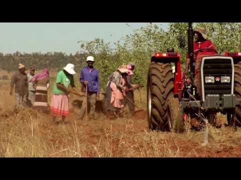 Carbon Mitigation With Bamboo Farming | JoziMyBeginning