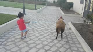 Nadine avec le mouton(Aïd edh7a 2016)