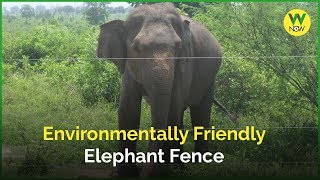 Environmentally Friendly Elephant Fence