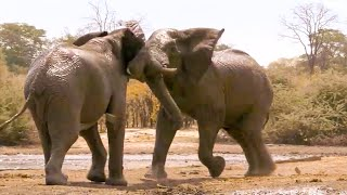 Top 5 NailBiting Elephant Moments | BBC Earth