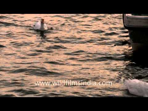 City of lakes - Bhopal