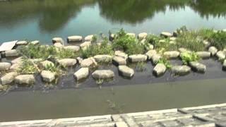 神奈川県の川を探索1/2  ナマズや雷魚などが生息してます。 thumbnail