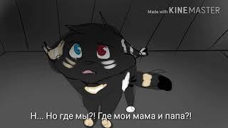 ♡Озвучка♡ Коты Воители~Озвучка части истории Энки и Айлы🐾
