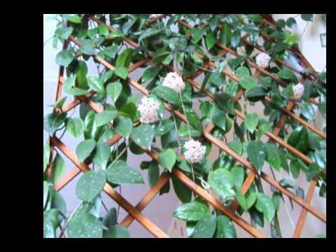 Красивые опоры для вьющихся растений